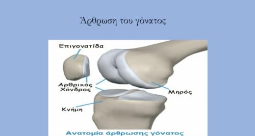 Άρθρωση του γόνατου
